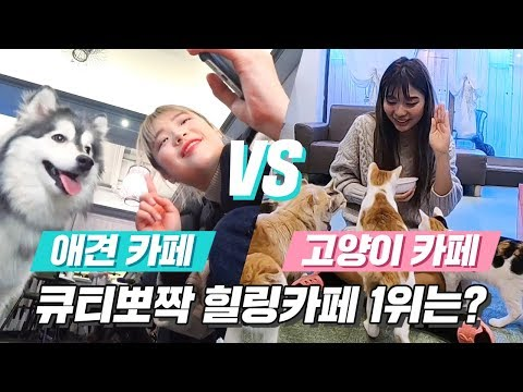 *심쿵사주의* 고양이 카페 vs 애견카페 대결! 힐링카페 1위는 어디? [ 애견 카페 vs 고양이카페 동물 힐링카페 ] 미션언니